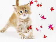 Фотошопики Котята от ♥Роксёнок♥