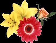 Какой ты цветок?