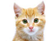 Твоя любовь к кошкам