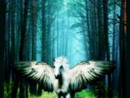 22110580_13084835_Pegasus_by_Cassandra28