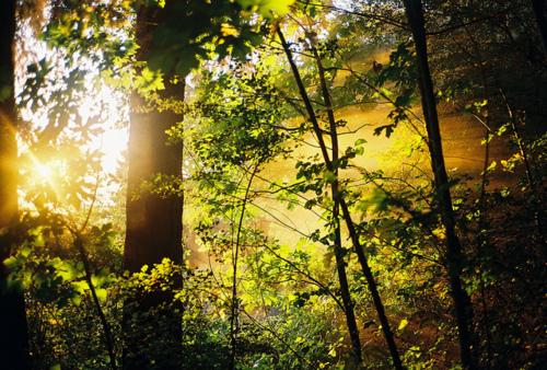 Тропические леса,джунгли!