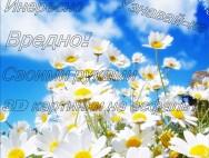 u4383_7264_romashki