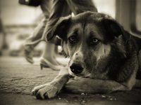 «Динго» Грустная история собаки. ッ[LaDy MiCkEy MoUsE]ッ