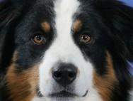 Собачка!!! :)