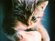 adorable-cute-fuffly-kitteh-kitten-Favim.com-410715