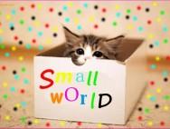 animal-beautiful-box-cat-cute-Favim.com-437221