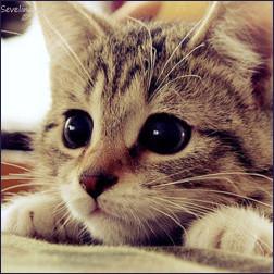 Картинки для аватарки с котами