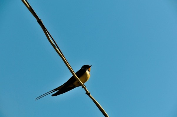 Одинокая птичка!