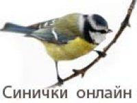Синички — онлайн трансляция