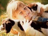 Как уговорить маму взять котенка или щенка