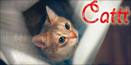 Животные Tumblr_m1k5c37f6B1r6b7kmo1_500