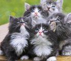 Милые котята  Пазл