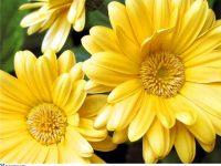 Твой цветок радости?