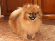 Какая ты порода собак и как к тебе относятся?