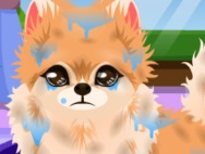 3_pup