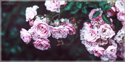tumblr_n1bu5gdy3u1qmtqugo1_500