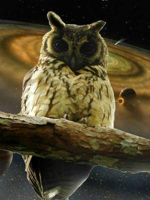 MadagascarLong-earedOwl