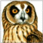 аватарка с страшной совой 2