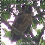 аватарка с страшной совой 4