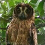 аватарка с страшной совой