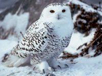Журнал «Owl House» выпуск № 4