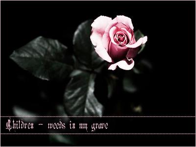 the_sun_kissed_rose_stock_jpg_8