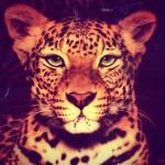 Рисунок профиля (•♦♥NatusiK♥♦•)