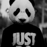 Рисунок профиля (panda*-*)