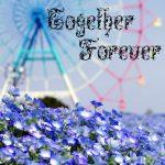 Логотип группы (❀ Together Forever ❀)